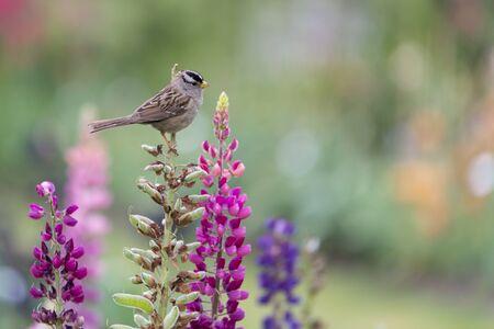 A small bird sitting on a snap dragon in a flower garden Фото со стока