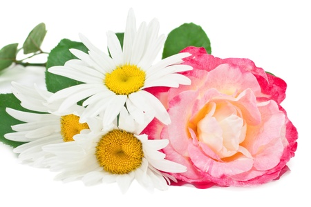 roses and daisies isolated on white 版權商用圖片