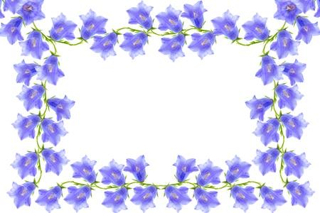 bluebells: bellflovers frame Stock Photo