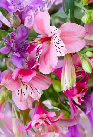 flowers alstroemeria
