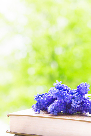 Bouquet hyacinths muscari on book on background of spring garden 版權商用圖片