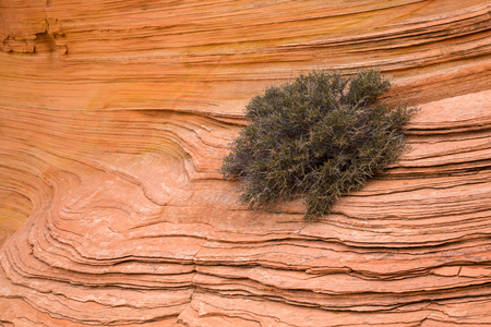 offset up: Layered sandstone is broken up and gave just enough space for this Cliff Rose to take hold and grow in the desert rock. Several colors of red, orange and yellow are visible in the rock, offset by the light green of the bush.