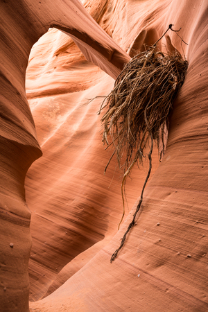 An arch in a narrow slot canyon in Arizona captured a mess of flood debris when a flash flood swept through the canyon. The debris has since dried up and is stuck against the arch and the canyon wall
