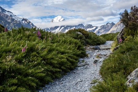 The summit of Mount Cook towers above the clouds in the distance, while a winding gravel pathway seems to lead through the brush toward the mountain Stock Photo