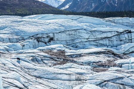 Black bear wandering among crevassed and broken ice of the Matanuska Glacier in the Chugach Mountains of Alaska. Фото со стока