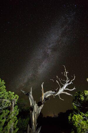 Dead juniper tree illuminated under dark night sky with visible Milky Way Galaxy and universe beyond. Фото со стока