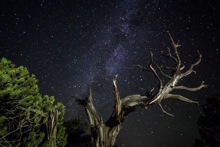 Juniper trees in the Utah desert lit at night with many stars and the Milky Way galaxy overhead.