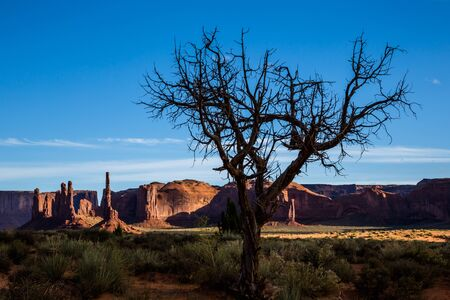 Behind the curling branches of a dead juniper tree are numerous cliffs and thin towers of sandstone in Monument Valley, Arizona.