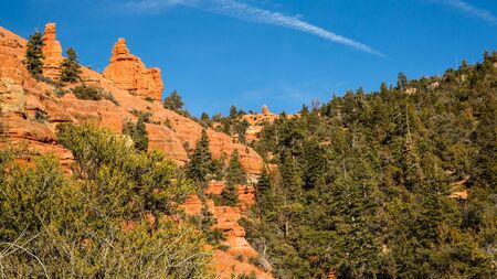 At nearly 10,000 feet in elevation, the red rock of Southern Utah is overgron by cedar and juniper. Near Byrce Canyon National Park.