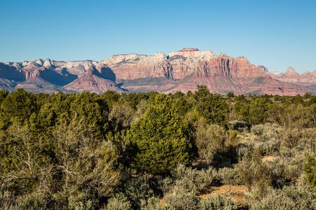 Green sagebrush, pinyon pine and juniper trees in spring below massive red rock cliffs of Zion National Park.
