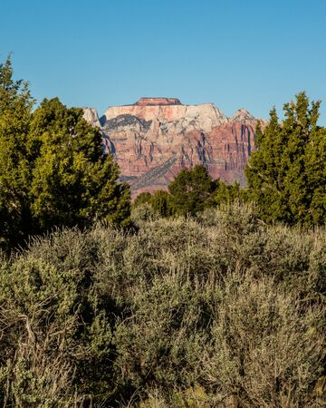 Looking through tall green juniper and pinyon pine trees at a massive red and white layered sandstone mesa in the southern Utah desert.