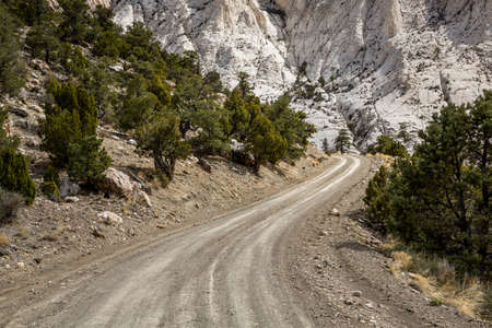 White Limestone rock over dirt road through Juniper trees in the Utah desert. Фото со стока