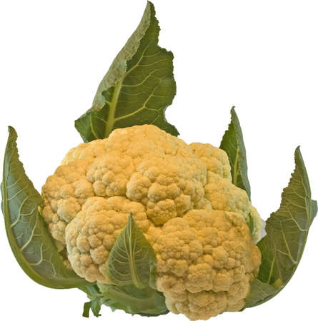 Closeup of large head of cauliflower isolated with white background Stock Photo