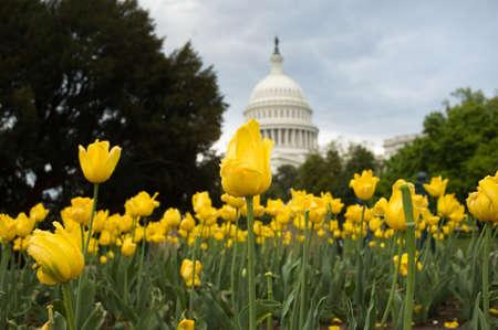 congressional: United States Capitol in Washington, DC