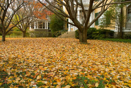 Yellow leaves lay on grass in front yard of suburban house