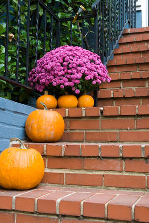 homey: Pumpkins and pink-purple flowers on brick steps.  Ready for Thanksgiving