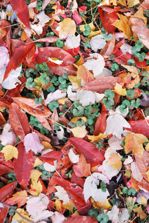 Beautiful leaves lying on forest floor. Symbolizes fall, change of seasons. Banque d'images