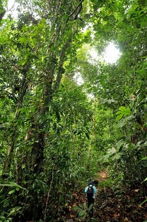 sabah: Jungle trekking in Sabah (Malaysian Borneo).