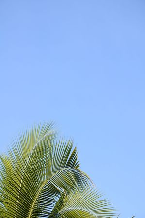 palm sunday: Palm tree leaves against a clear blue sky. Stock Photo