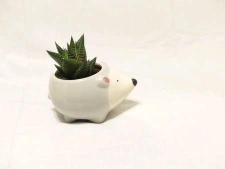 Cactus in a hedgehog pot