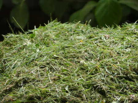 Freshly cut pile of grass clippings or cuttings, mown lawn or gardens Stock fotó