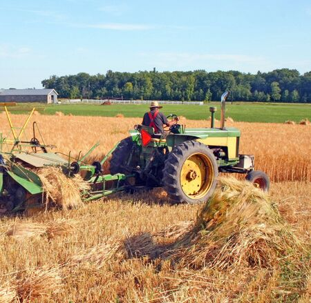 antique tractor and cutter harvest barley