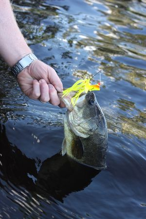 largemouth bass caught Stock Photo