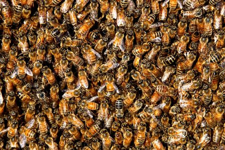 honing een zwerm bijen in een korf achtergrond Stockfoto
