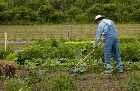 landbouwer in de tuin wieden van de planten