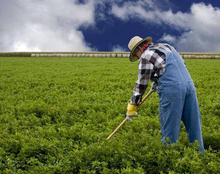 hay field: farmer cultivating a field by hand