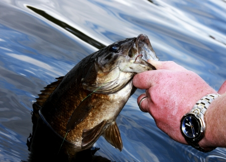 bass fishing: fisherman pulling a bass from the lake by the lip Stock Photo