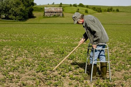 elderly man in a walker raking a field of plants