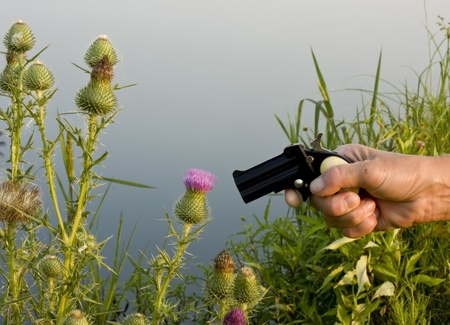 pistol pointing at thistles for weed killer