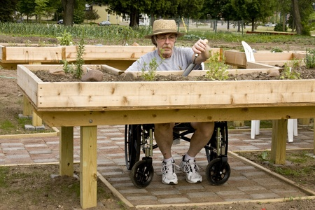 handicapped gardener working on raised beds made of wood