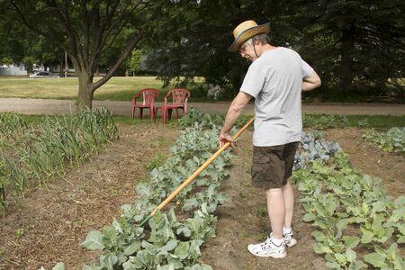 tending: gardener tending and weeding plants in the garden
