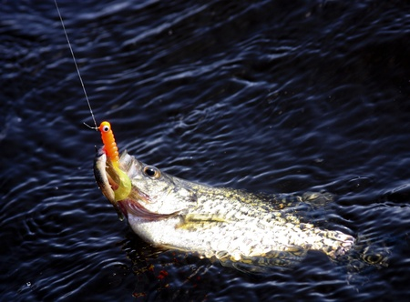 crappie hooked and being reeled in with orange bait in its mouth Stock Photo