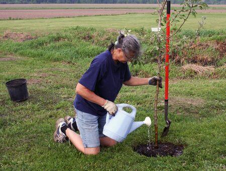 vrouw planten en water geven een appelboom