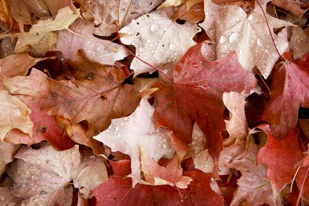 foiliage: autumn leaf ground cover makes a fall background Stock Photo