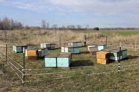 beehives on a farm field protected by a solar electric fence