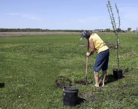 sembrando un arbol: Mujer plantar un �rbol en el patio Foto de archivo
