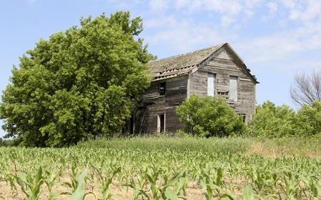 homestead: old abandoned farm house on a corn field Stock Photo