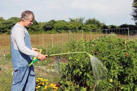 retired senior watering his garden with a hose spray wand