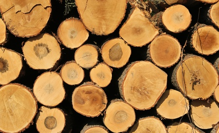 sawed: log pile of oak lumber makes a lumber industry background Stock Photo