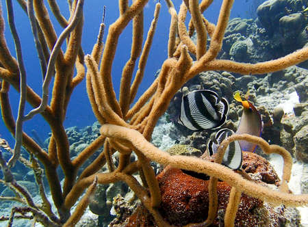 reef fish: Tropical fish on a reef in soft coral