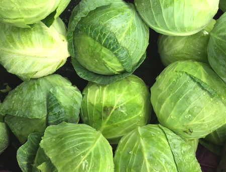 Fresh picked heads of lettuce make a lettuce background