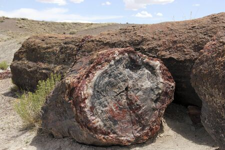 petrified fossil: Log of Petrified wood specimen in its natural outdoor setting Stock Photo