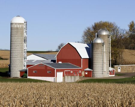 Wisconsin dairy farm surrounded by corn fields Stock Photo