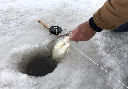 Crappie gevangen terwijl ijsvissen