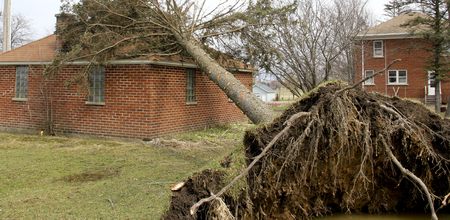 high winds: Brick house has a tree on it from Tornado and high winds