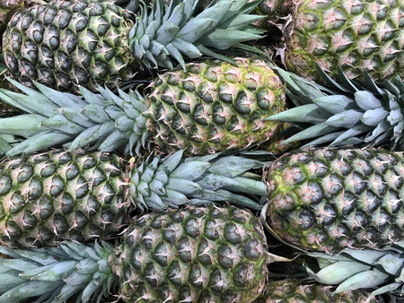 Several fresh Pineapples make a Tropical Fruit Background